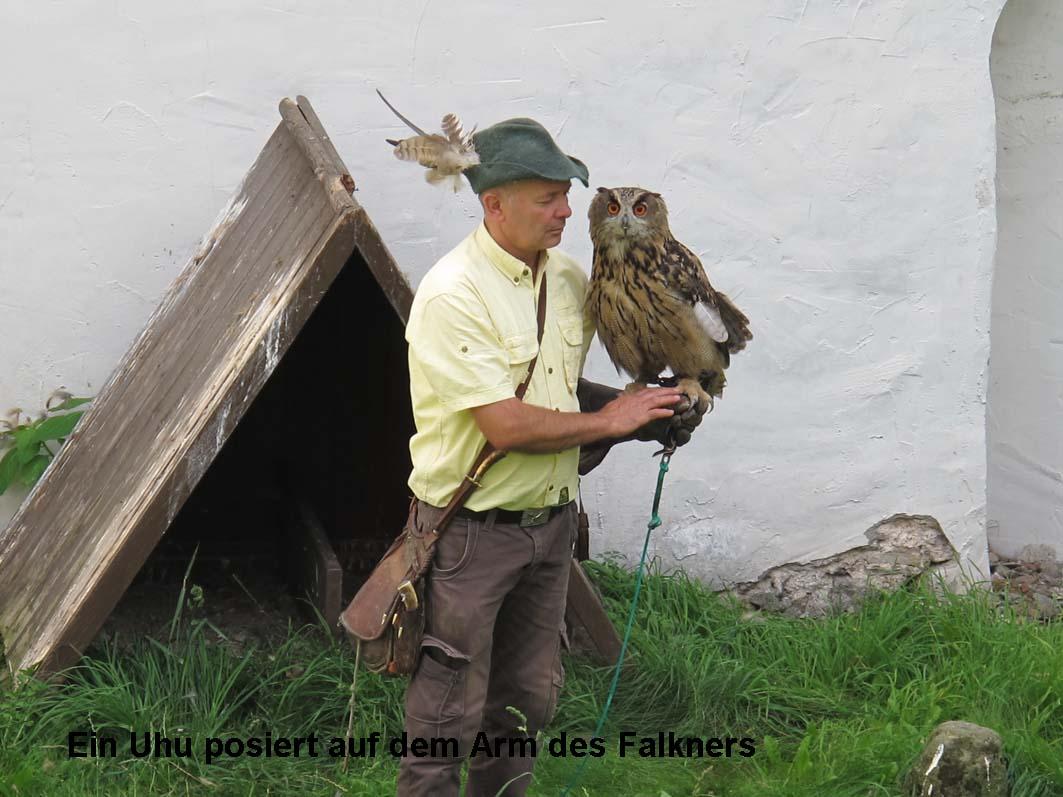 5-Falkner mit Uhu