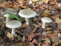 4 unbekannte Pilze